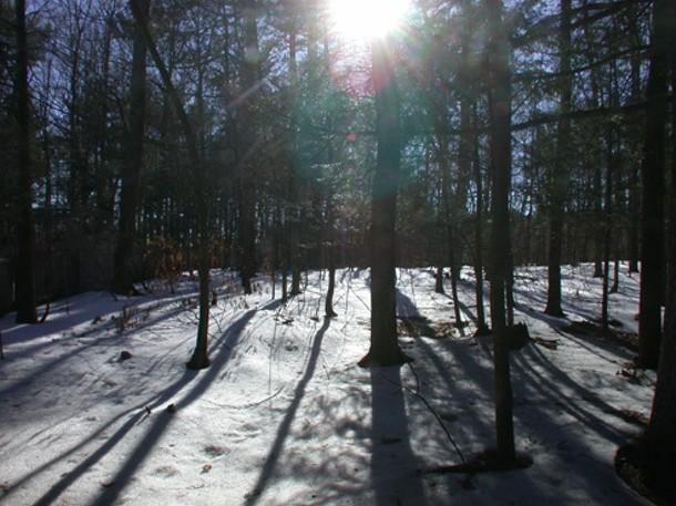 esteemed-reader--trees-in-snow.jpg
