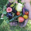 Agritourism Helps Sustain Hudson Valley Farms