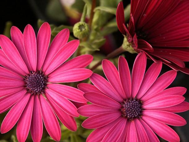 flowersr.jpg