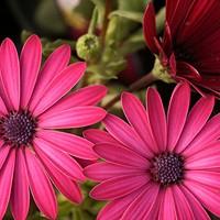 Garden Fair, A Celebration of Gardening in the Hudson Valley
