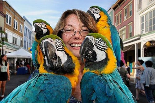 Gloria Waslyn with her parrots at the Chronogram Block Party on August 17.