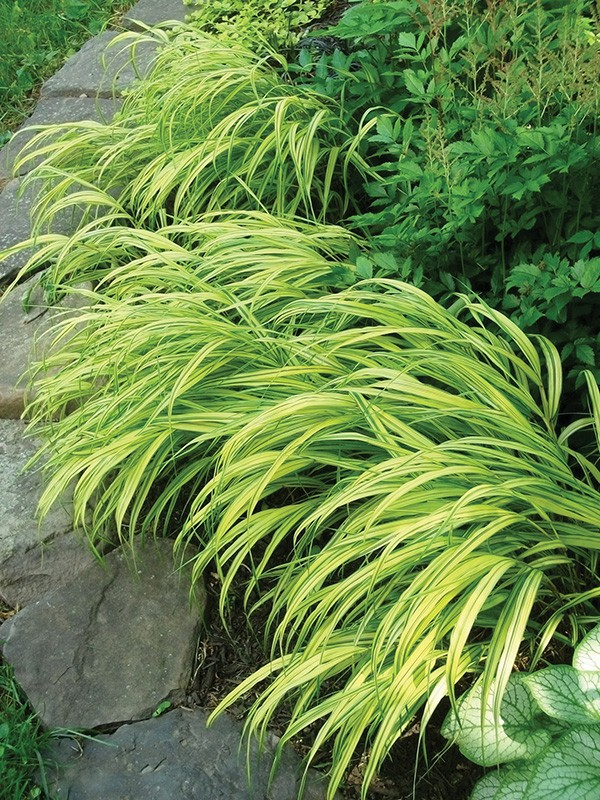 Variegation The Spice Of Plant Life Gardening Hudson Valley