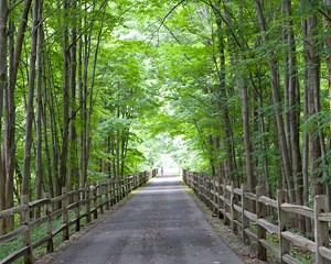 Harlem Valley Rail Trail to Get an Update