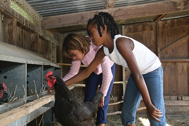 Hawthorne Valley camp kids collecting eggs.
