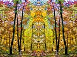 a73db1c3_woodland_portal.jpg