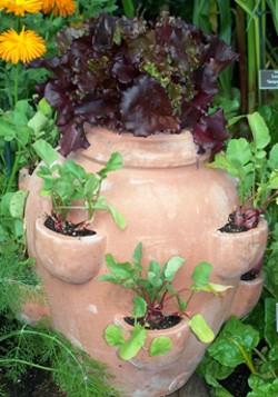 514a5306_herbs_in_clay_pot_2011_kg_edit4.jpg