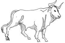 horoscope--taurus.jpg