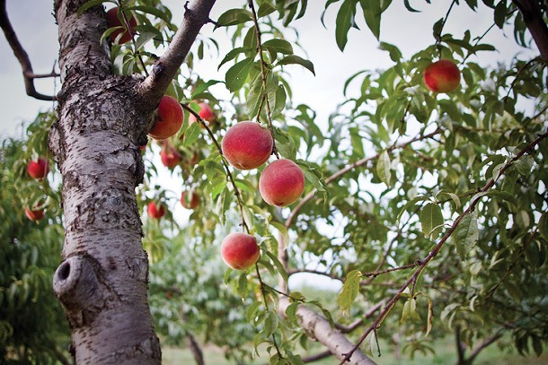 In the orchard at Fishkill Farms