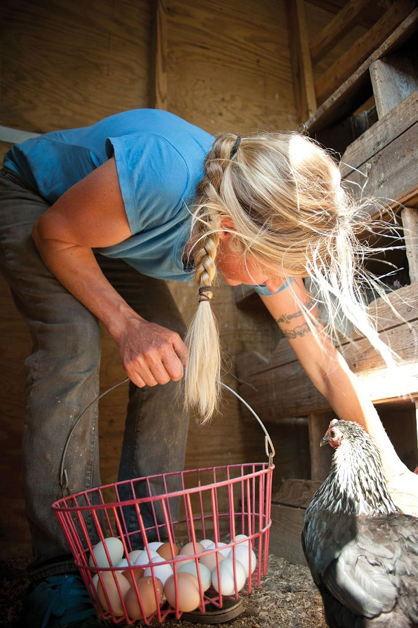 Kira Kinney gathering eggs at Evolutionary Organics in New Paltz - ROY GUMPEL