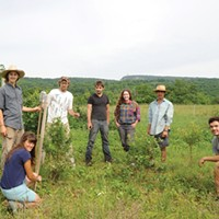 New Paltz and Gardiner (l-R) Shay Otis, Chris Natalie, Creek Iversen, Elijah Santner, Natalie Tummolo,  Dan Moon, and Will Wheeler netting blueberries at Brook Farm in New Paltz. Kelly Merchant