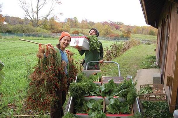 Lise Serrell and Lara Sheets prepare the Glynwood CSA harvest for distribution. - FRANKIE KIMM