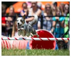 edaaf489_dog_flying.jpg