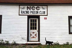 NCC Racing Pigeon Club, Cairo. - ROY GUMPEL