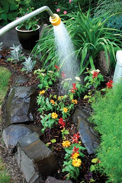 Newly planted things need extra vigilant watering attention. - LARRY DECKER