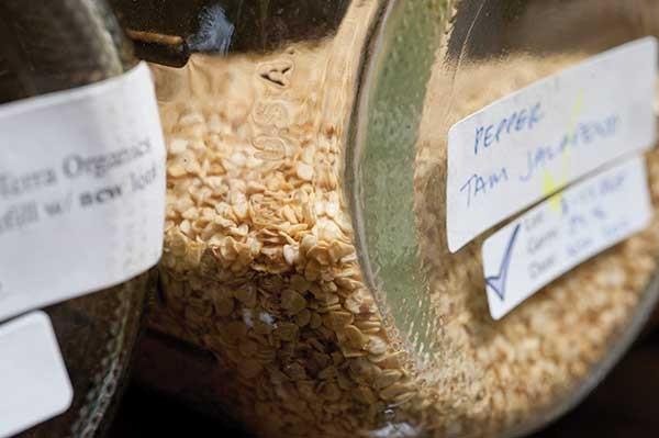 Pepper seeds in jars. - ROY GUMPEL