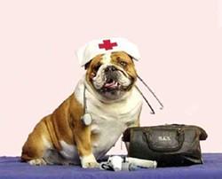 e3ea6093_pet_nurse.jpg