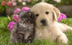 75983a3a_puppy_and_kitten.jpg
