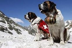 9716bca4_rescue_dog.jpg