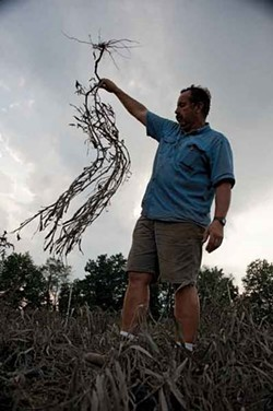 Pete Taliaferro holding a drowned tomato plant on his farm on the Wallkill River in New Paltz. - ROY GUMPEL