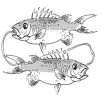 Pisces for April 2015