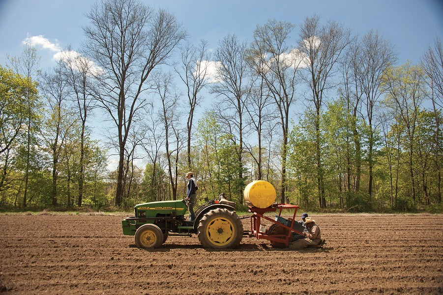 Planting garlic at Taliaferro Farm in New Paltz. - ROY GUMPEL