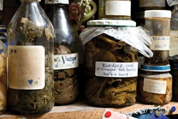 Preserved herbs on a shelf in Susun Weed's home. - JENNIFER MAY