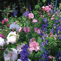 Hudson Valley Garden Association