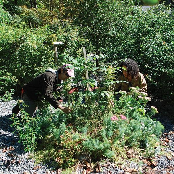 Scott Serrano and Allyson Levy in their extensive botanical garden in Stone Ridge. - LARRY DECKER