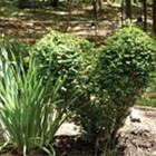 Keith Buesing Topiary Design