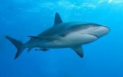 03c95b2e_shark.jpg