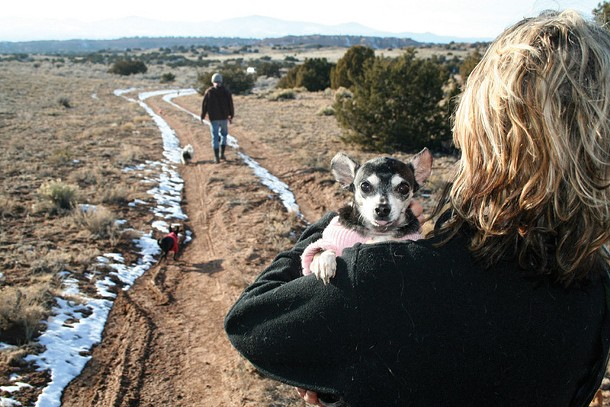 Steven Kotler and Joy Nicholson walking near Rancho de Chihuahua in Chimayo, New Mexico with Damien, Blue, and Apple. - THADDEUS  KOSTRUBALA