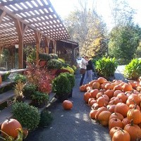 Sunfrost Farms in Woodstock: Soups, sandwiches & pumpkins!