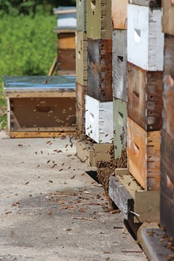 The bee yard at Hudson Valley Bee Supply. - PETER BARRETT
