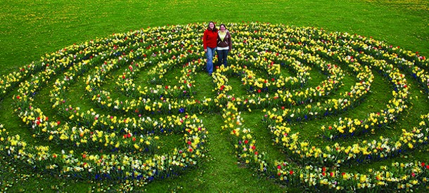 This bulb labyrinth was planted by Cornell Professor Bill Miller's Herbaceous Plant Materials class in the fall of 2008. You can take a virtual tour online. Right: The Minns - Garden at Cornell University, where students of all ages learn about landscape design and plant identification. - DEPARTMENT OF HORTICULTURE, CORNELL UNIVERSITY.