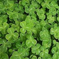 Top Five on Friday: Celebrating St. Patrick's Day