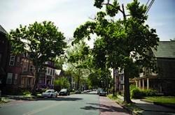 Tree-lined street in Newburgh. - JULIE PLATNER
