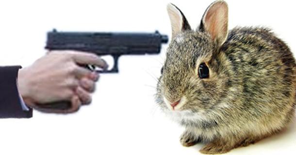 wyws_freshmen-bunnies.jpg