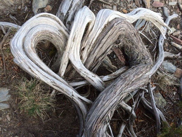 Juniper branch heart at Prout's Neck in Maine - AMANDA PAINTER