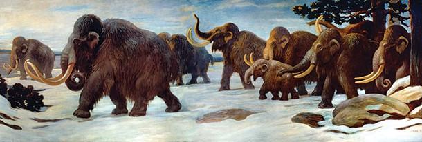 wyws_wooly_mammoths.jpg