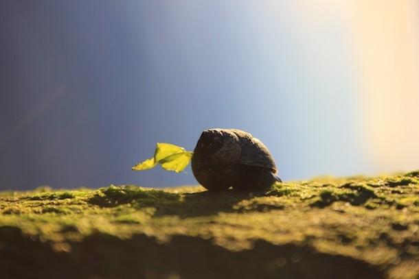 600_dawn_snail1_april_2017_img_8557_copy.jpg