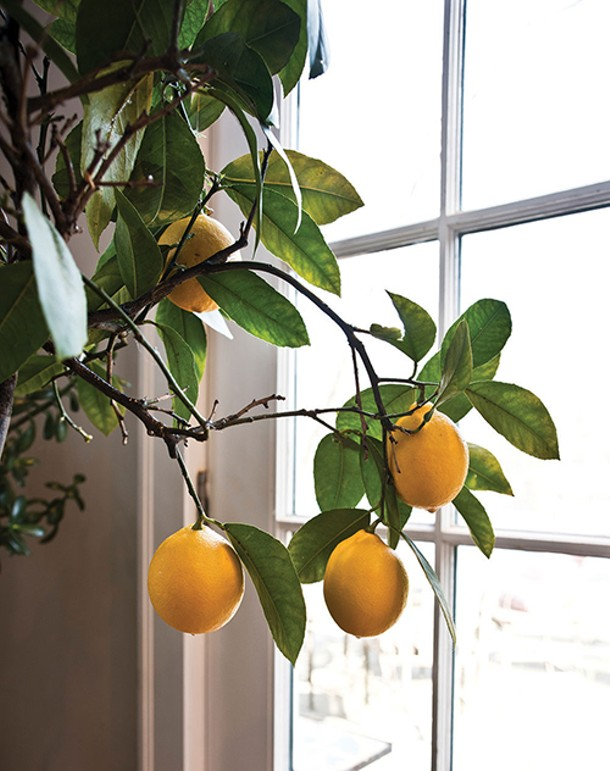 A lemon tree adds a colorful accent to Coleman's home. - DEBORAH DEGRAFFENREID
