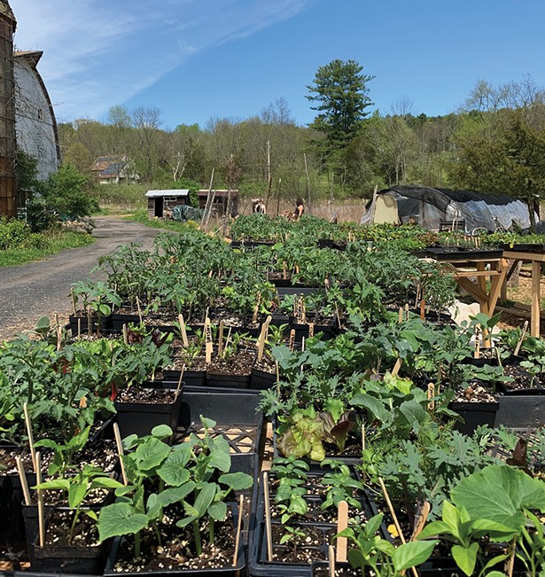 Plants ordered from Clove Valley CSA's new online store packed for curbside pickup at the farm in High Falls.