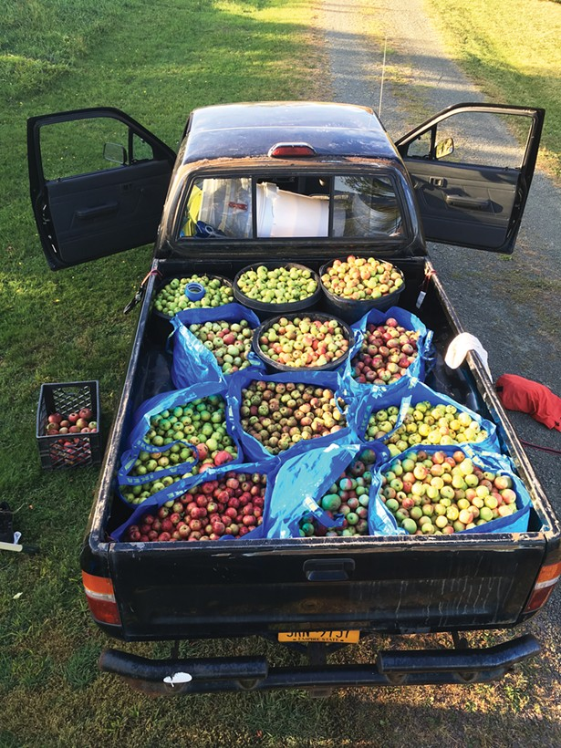 A pickup truck's worth of apples foraged by Tim Graham - and Anna Rosencranz of Left Bank Cider.