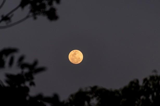 october_astrology_harvest_moon-4486104_1280.jpg
