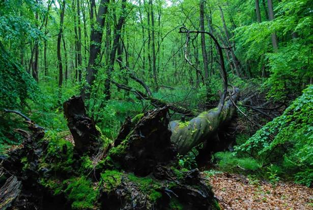 Biosphere Reserve Schorfheide Wilderness - © EUROPEAN WILDERNESS SOCIETY CC BY-NC-ND 4.0