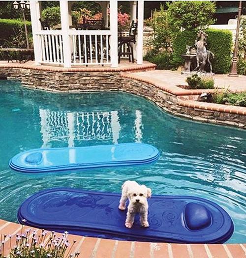 art-of-biz_aquajet_dog-in-pool-with-gazebo.jpg