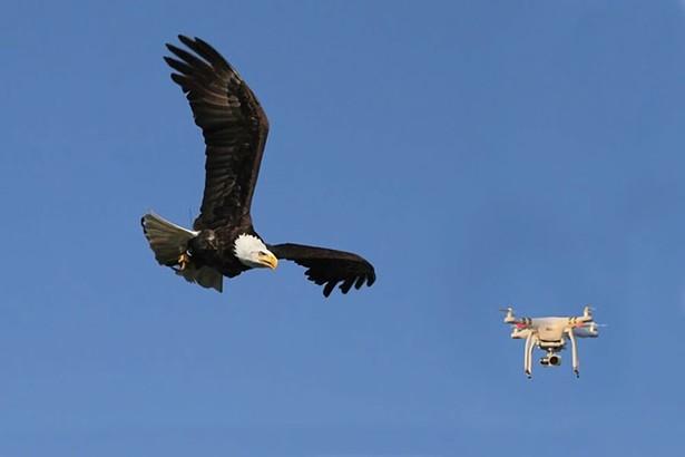 wyws_eagle-vs-drone.jpg