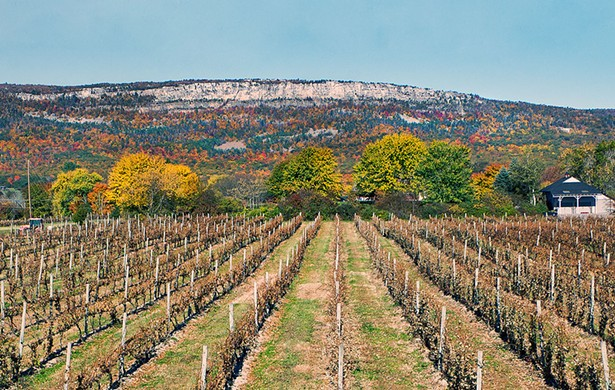 Whitecliff Winery in Gardiner is part of the recently launched Hudson Valley Cabernet Franc Coalition.