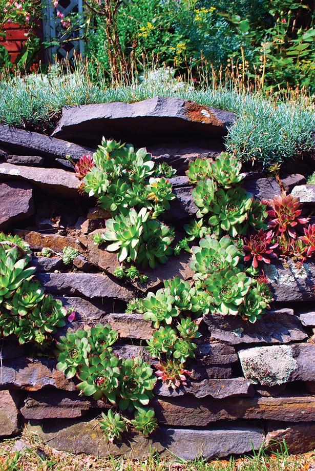 Tips For Rock Garden Landscaping Gardening Hudson Valley