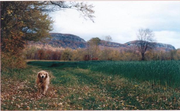 dyna_the_dog_in_a_fall_field.jpg